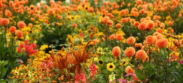 Bee Friendly Flowers for your garden Autumn flowers