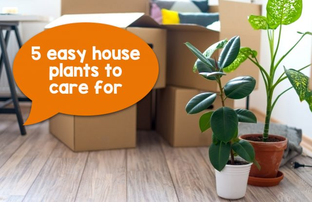 5 easy house plants to care for
